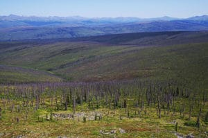 Figure 1. White Mountains burns. 2004 fi res burned hundreds of thousands of acres in this part of Alaska