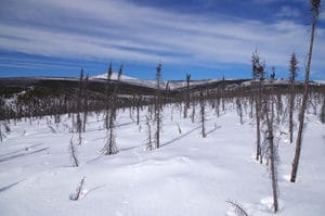 Figure 3. Late winter in the burn. April snowpack coincides with the return of long days to the Arctic.