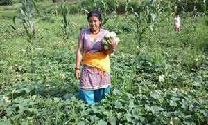 Sita Neupane showcases her freshly harvested cucumbers grown without the use of chemical pesticides. (Ramdeo Sah/CEAPRED)