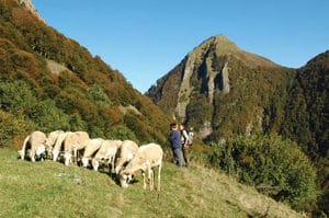 Figure 5. The Pyrenees have been traditionally used for grazing live stock. Here, we were discussing grazing with a shepherd at the Chapelle d'Isard in the Pyrénées Ariégeoises.