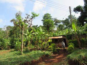 Chagga homestead within the forest margin
