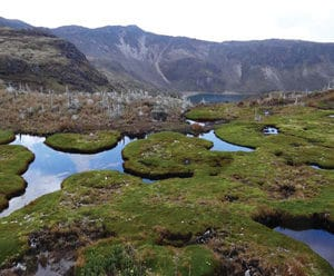 Cushion bog at about 4,600 masl feeding downstream Laguna Verde.