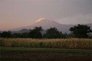 Mt Kibo (5895 masl), the highest peak of Mt Kilimanjaro (photo credit Claudia Hemp)