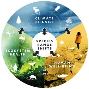 Infographic from the Science-article, showing that species range shifts will affect ecosystem health, human well-being ànd climate change itself.