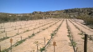 Experimental site for organic rooibos for co-op farmers