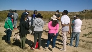 Co-op farmers demonstrate the process of rooibos farming to visitors.
