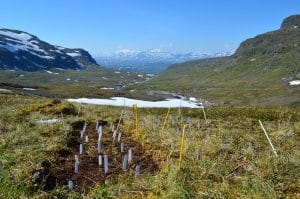 Experimental plot in the mountains of Swedish Lapland