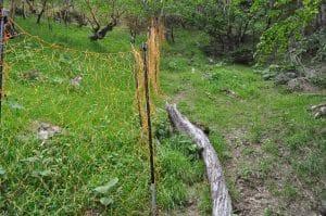 Vegetation inside and outside the fence