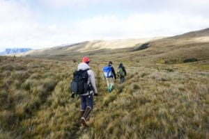 Hiking in the paramo, an unusual yet crucial Andean ecosystem