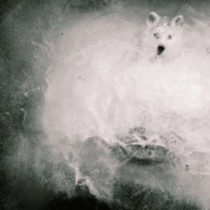 The wolf's figure crystallizes a feeling of fear, sometimes visceral and irrational.