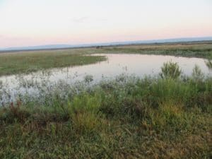 The very flat Nylsvley floodplain with the Waterberg Mountains in the distance (Photo SJ Taylor, May 2018)